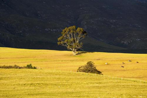 Africa, South Africa, Western Cape, Swellendam, Marloth Nature Reserve